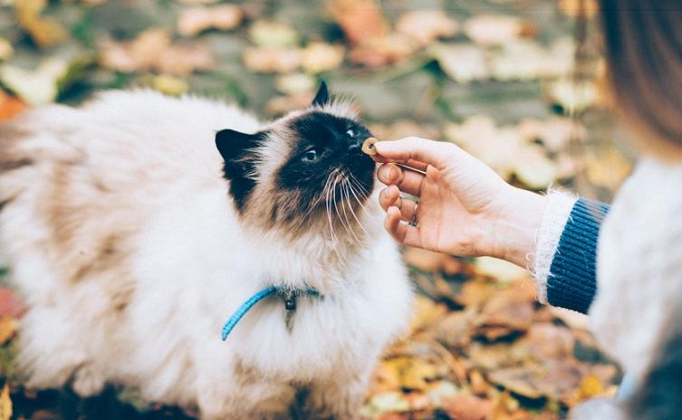 Guide : Éléments à prendre en compte lors de l'achat d'un GPS pour chats